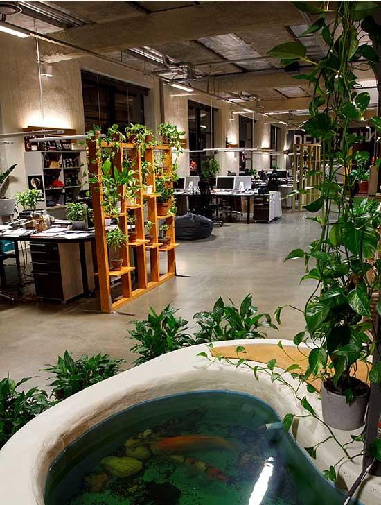 Traer el aire libre al interior de la oficina - Plantas oficina ...