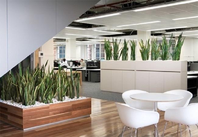 Plantas en tu lugar de trabajo equipamiento integral de for Decoracion con plantas de interior para oficinas