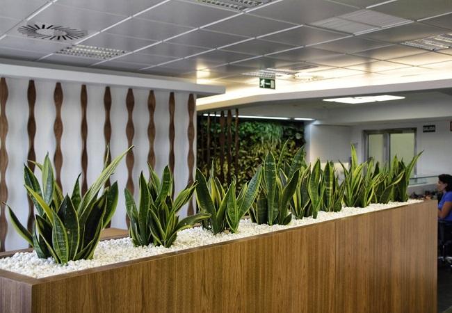 Plantas en tu lugar de trabajo equipamiento integral de for Jardineras para interiores