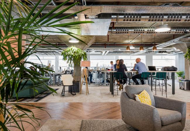 Decora tu oficina con plantas equipamiento integral de for Oficinas decoradas con plantas