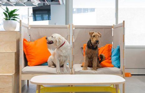 Le presentamos algunas oficinas dog friendly