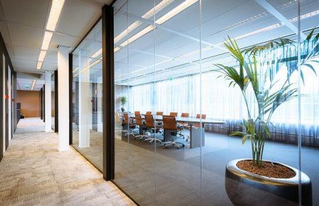 Plantas en tu lugar de trabajo