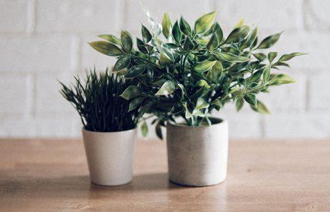 Elementos naturales para ofrecer un diseño único a su oficina